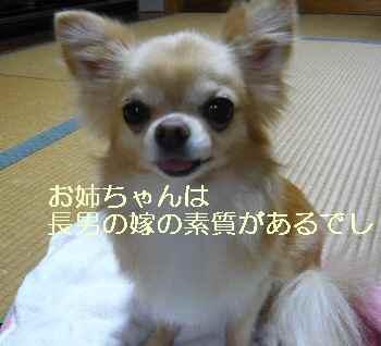 blog2013081703.jpg