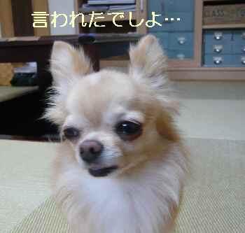 blog2013081902.jpg