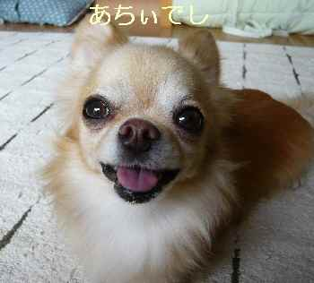 blog2013082101.jpg