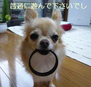 blog2013082202.jpg