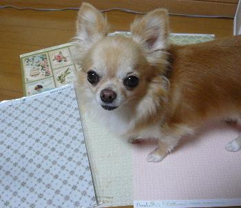 blog2013082401.jpg