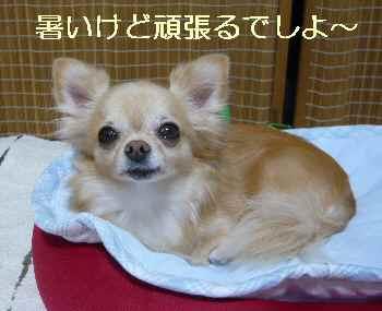blog2013083103.jpg