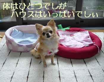 blog2013090502.jpg