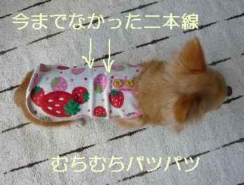 blog2013090504.jpg