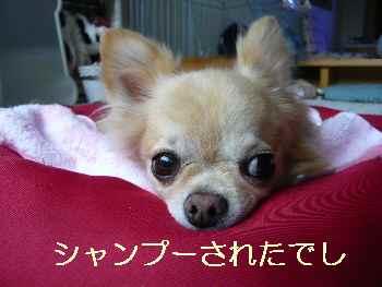 blog2013090703.jpg