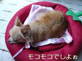 blog2013090704.jpg