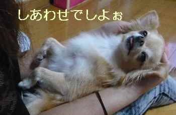 blog2013091503.jpg