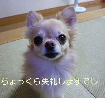 blog2013092004.jpg