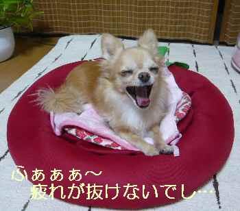 blog2013092403.jpg