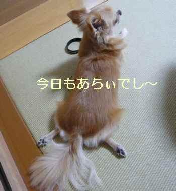 blog2013092504.jpg