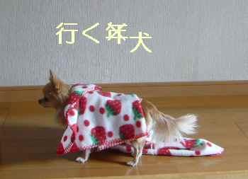 blog2013123103.jpg