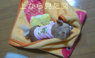 blog2014010905.jpg