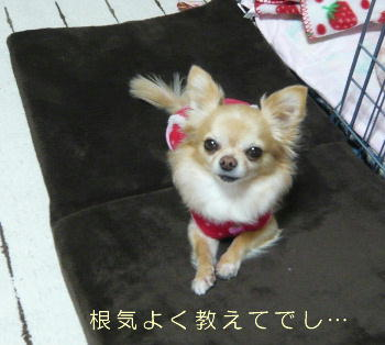 blog2014011104.jpg