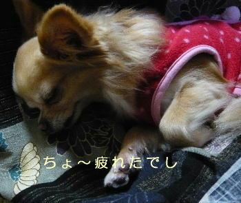 blog2014011203.jpg