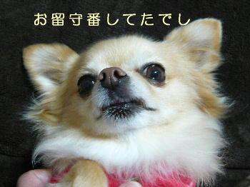 blog2014011301.jpg
