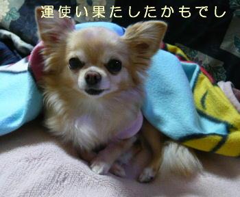 blog2014011603.jpg