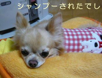 blog2014011801.jpg