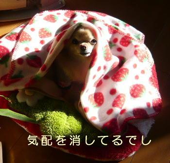blog2014011902.jpg
