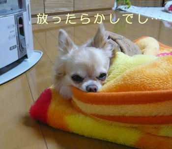blog2014013001.jpg