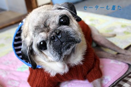 セーターも着ました