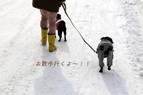お散歩行ったよ