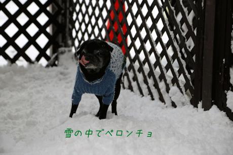 雪の中でペロンチョ