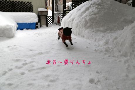 走る~~!