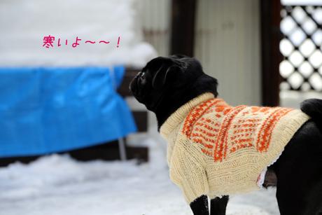 寒いけどね。。。