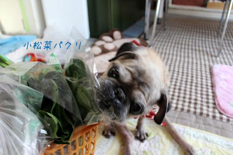 小松菜パクリ