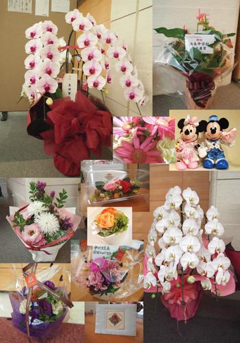 2013玉葉展お花