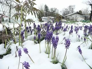 春と冬の競演!?