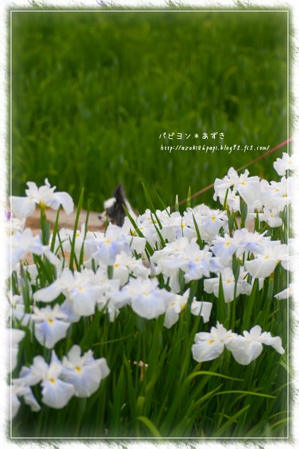 20130609_IMG_47.jpg