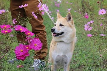 s-kosumosuIMG_4242