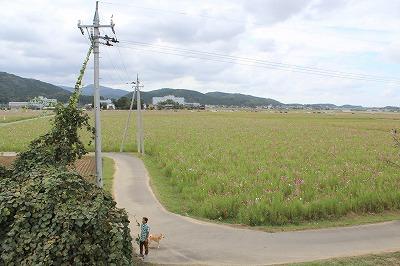 s-kosumosuIMG_4195