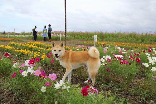 s-miyanoshitaIMG_4258