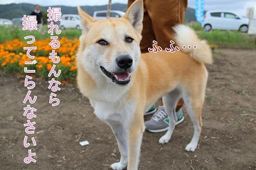 s-miyanoshita141009-IMG_4254