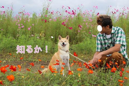 s-miyanoshita141009-IMG_4265