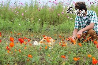 s-miyanoshita141009-IMG_4266