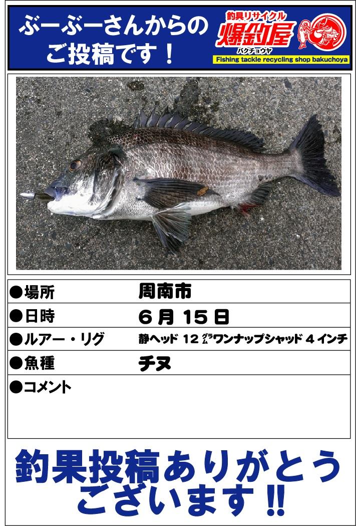 ぶーぶーさん20130615