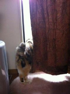 外をのぞく猫