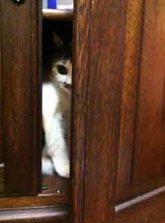 猫の家政婦さん・