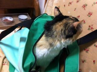 緑のバッグとすみれ