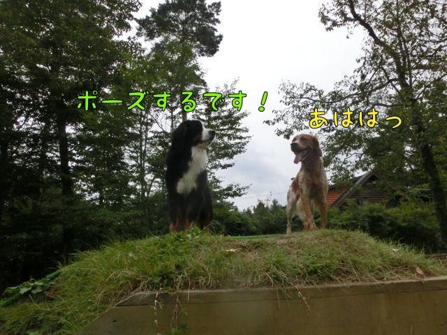 CIMG7345.jpg