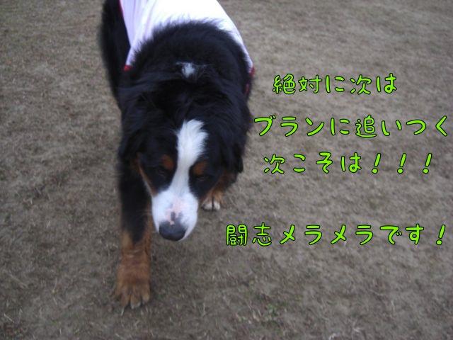 CIMG7507.jpg
