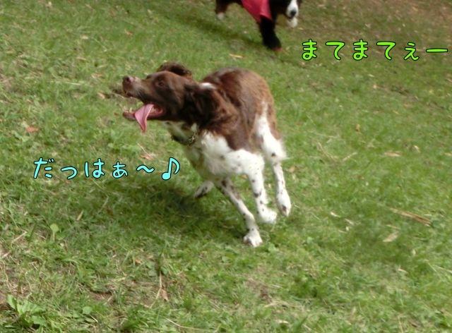 CIMG7733_2014093010290765b.jpg