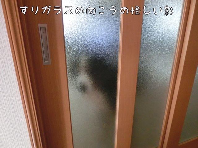 CIMG8179.jpg