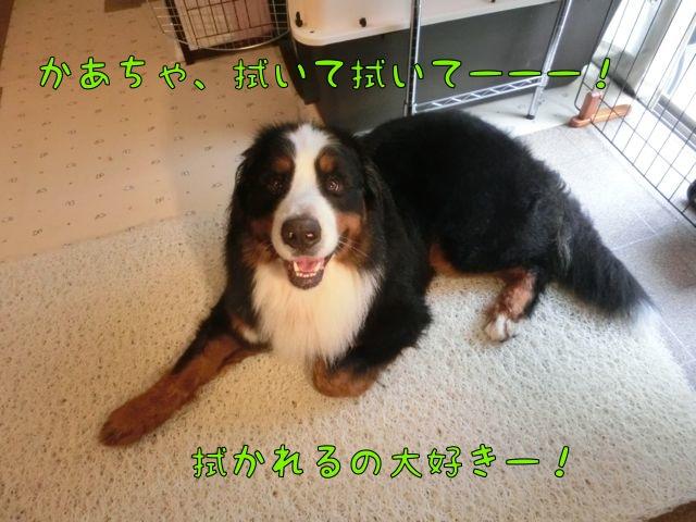 CIMG8189_201410042055150b0.jpg
