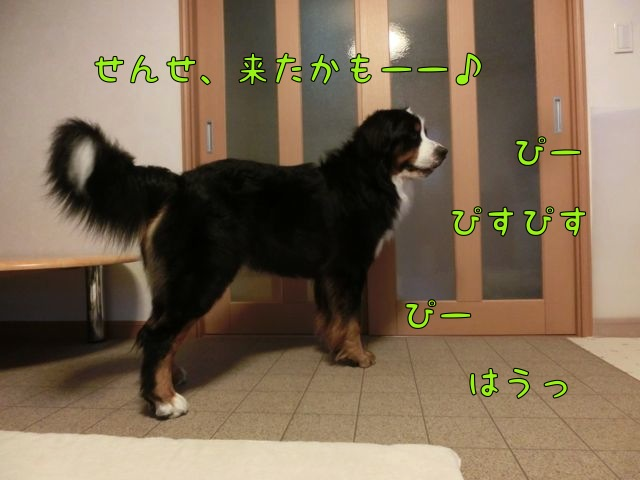 CIMG8213.jpg