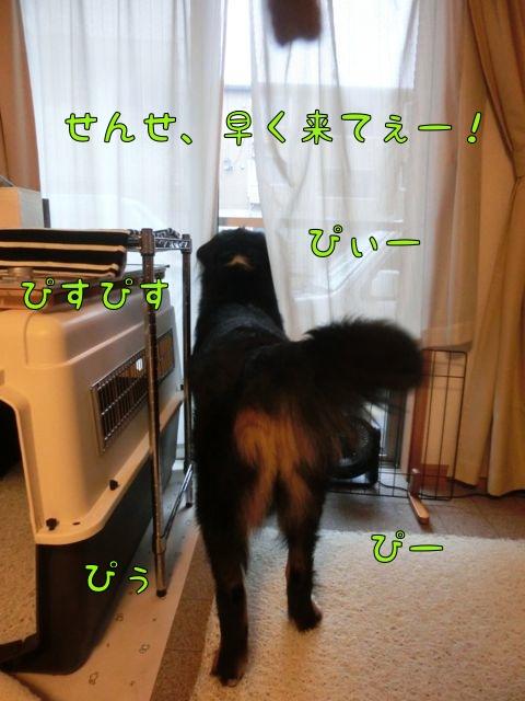 CIMG8215.jpg