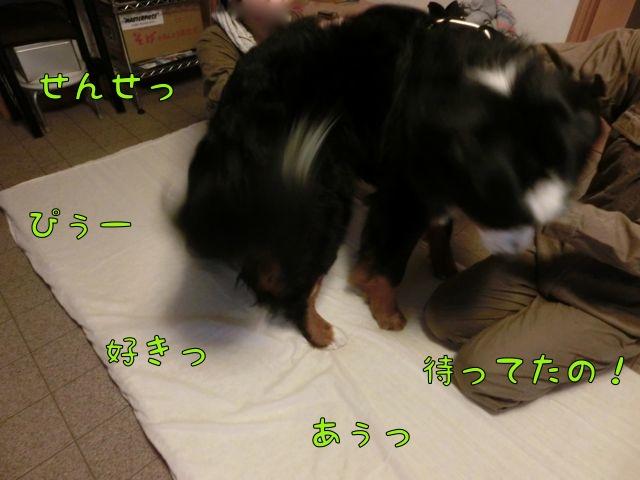 CIMG8219.jpg